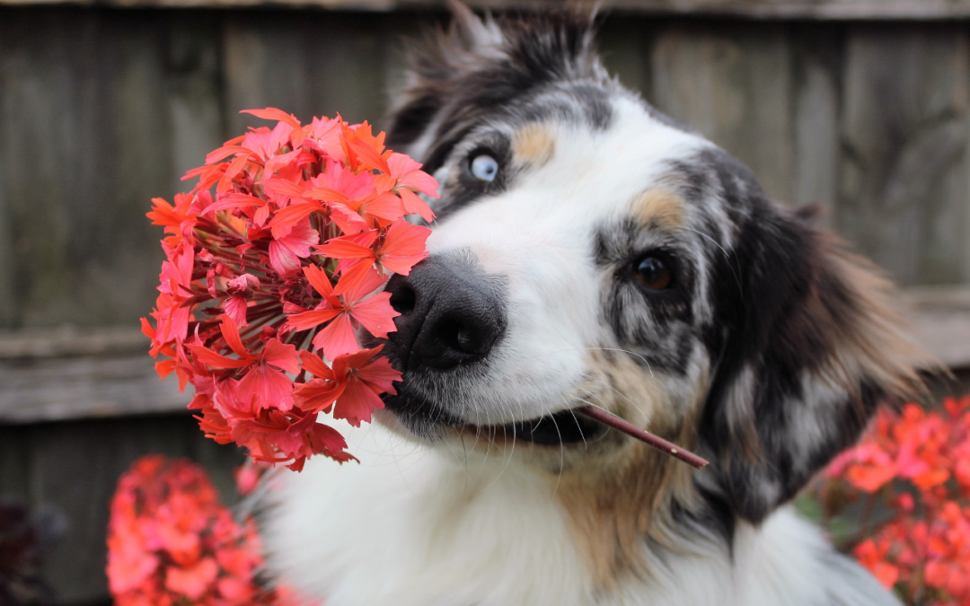 Keeping your pet safe in the spring